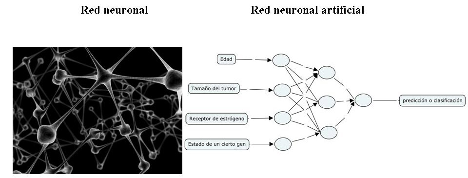 Figura 1 - Analog�a entre una red neuronal biol�gica y una artificial
